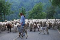 Pastori d'alta montagna